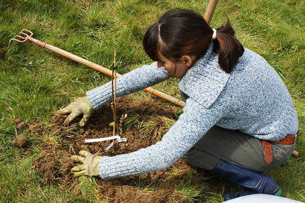 Le BDD collaborae avec les Jardins Vivriers de Boisbonne